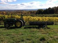 GFW-Fall-Tractor-Vines-View-Comp.jpg