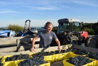 GFW-Kstop-Grapes-Harvest-Comp.jpg