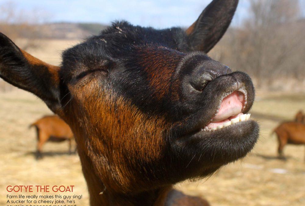 Goat Farm Long Island New York